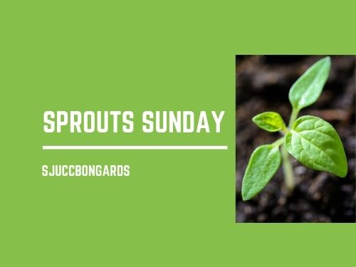 Logo Sprouts Sunday
