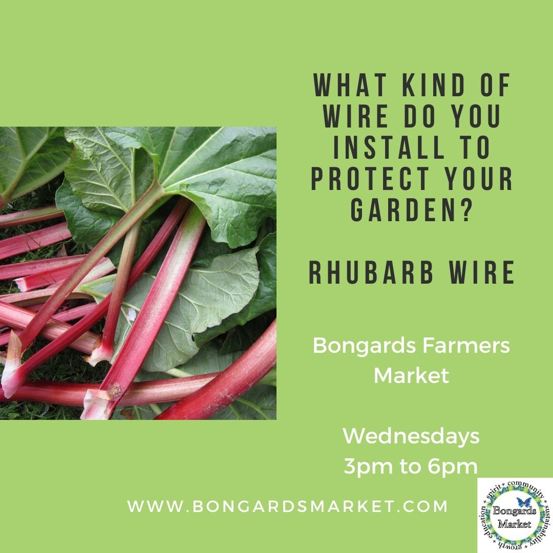 IG Post Rhubarb wire